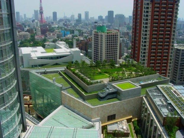 groen daken